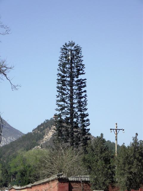 Фотография высокого дерева