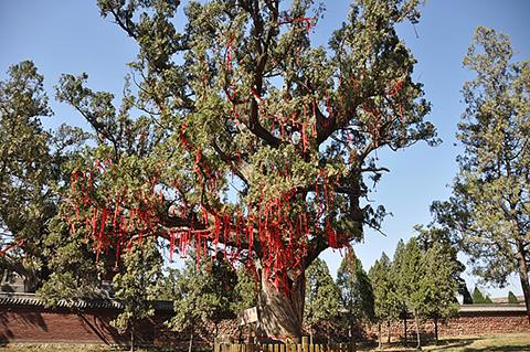Фотография дерева желаний