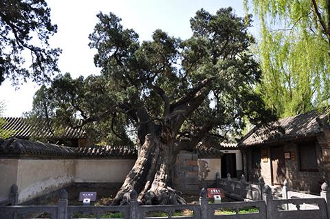 Фотография дерева в академии сонгьянг General 2