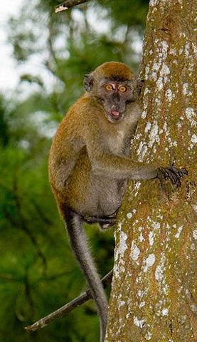 Фотография обезьяны на дереве