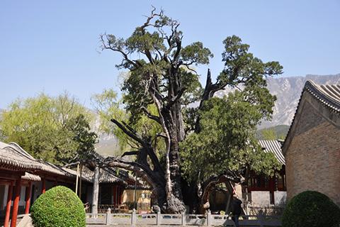 Фотография дерева в академии сонгьянг General 1